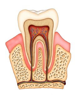 Root Canals Explained